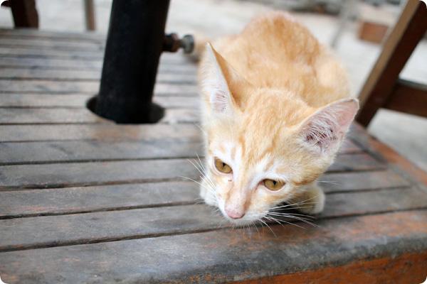 バーガーブロス看板猫